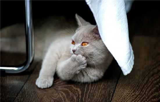 公猫最佳的绝育时刻 给公猫绝育能削减疾病插图(1)