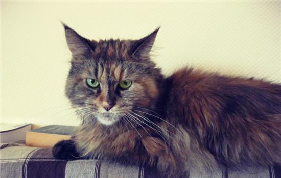 公猫最佳的绝育时刻 给公猫绝育能削减疾病插图(2)
