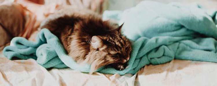 晚上怎么让猫咪睡觉 教你如何让猫咪在晚上平静的睡觉