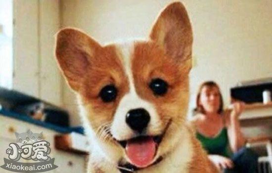狗狗不能吃什么 狗狗不能吃的东西大全插图