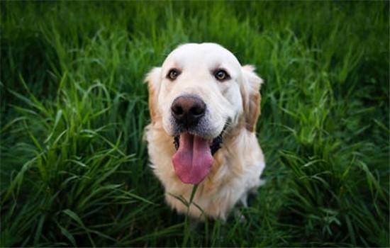 狗厌烦什么气味 一些刺激性的气味狗狗都惧怕插图