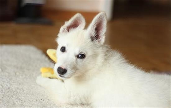 可以给狗吃花生米吗 狗吃了花生米会怎么样-轻博客