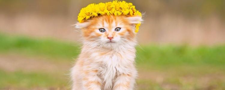 怎么训练小猫作揖 方法非常简单!