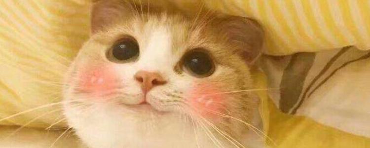 怎么判断猫藓在好转 预防猫咪再次复发猫藓也是很重要的!