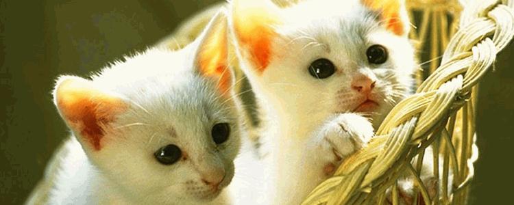 幼猫呼吸急促 别担心!