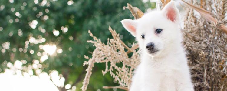 狗狗的社会化什么意思 什么是狗狗社会化训练?