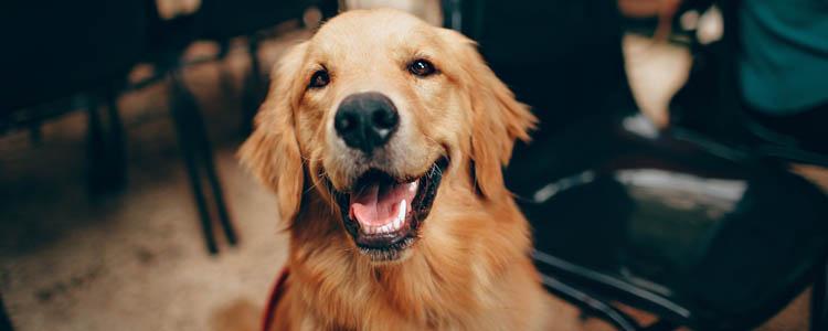 如何有效驱狗随地拉屎 训练不对别怪狗狗