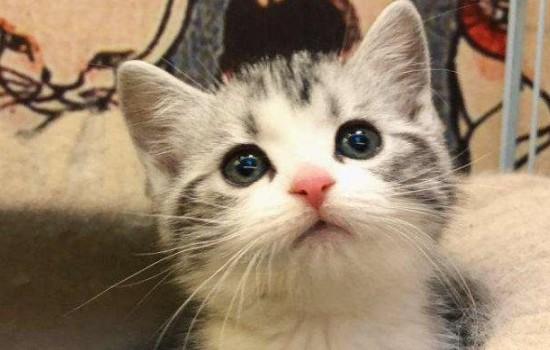 猫一只眼睛半睁 在治疗的时候注意猫咪的情绪,别伤到它!-轻博客