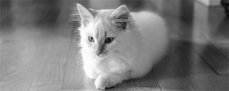 猫咪毛球性胃炎是什么 猫咪得毛球性胃炎的症状是什么