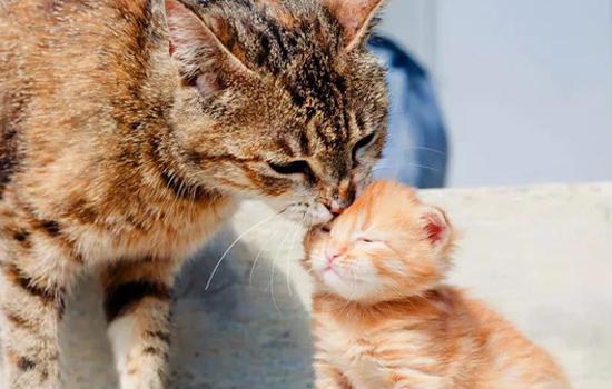 养小奶猫需求留意什么东西 科学喂食存活率高插图(1)
