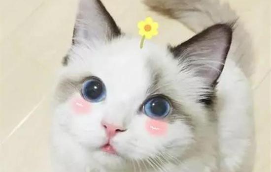 刚接回的小奶猫怎样养 防止应激是首要作业插图(1)