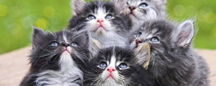 幼猫腹泻吃什么药 拉稀带血的幼猫一定要赶紧治疗!