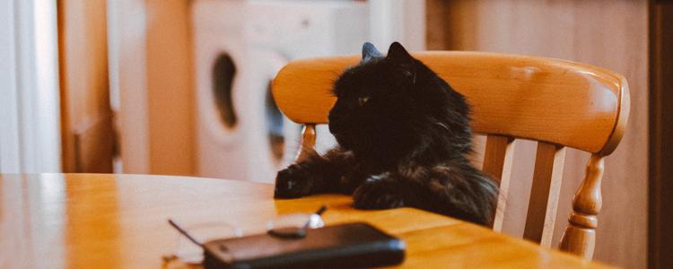 怎么预防人畜共患病 养猫应预防的人畜共患病!