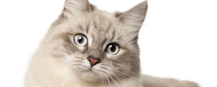猫麻醉的风险 了解麻醉,等于猫人一命