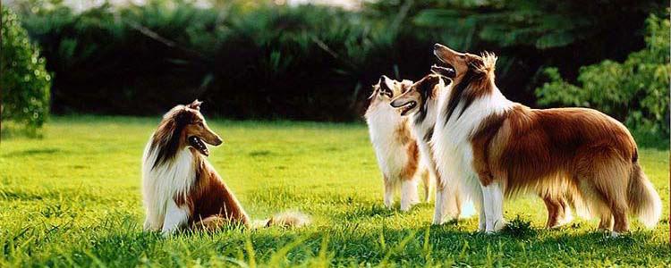 狗乱跑是什么病 教你如何训练狗狗不乱跑