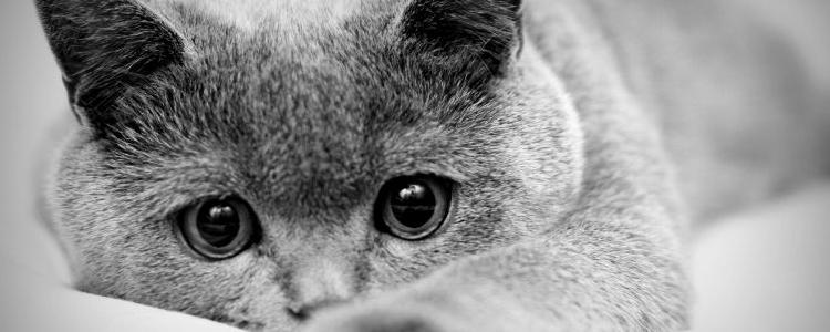 小猫什么时候吃驱虫药 小猫驱虫手册