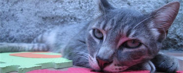 猫咪呕吐是怎咋了 猫咪的呕吐物为什么大不相同