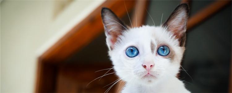 喂猫吃避孕药能避免发情吗 给猫吃避孕药的危害非常大