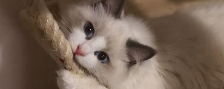 被猫抓伤了最迟多久打预防针 疫苗打晚了会失效?