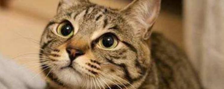 猫咪摇尾巴代表什么 这些情绪可以通过尾巴看出来哦