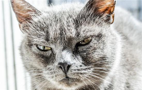 什么发型最适合猫 给猫剃毛不能强求插图
