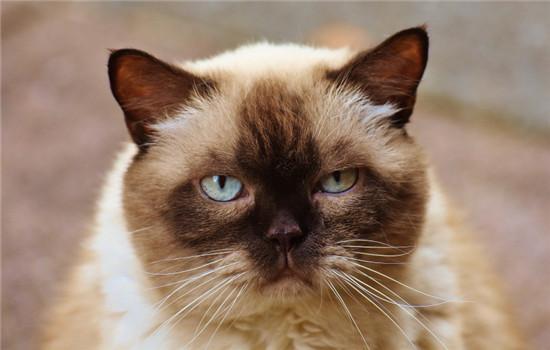 什么发型最适合猫 给猫剃毛不能强求插图(2)