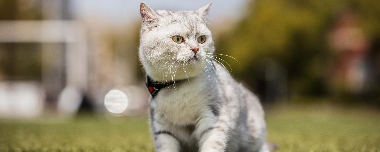 强行让猫咪摆动作 看看自己中招了没