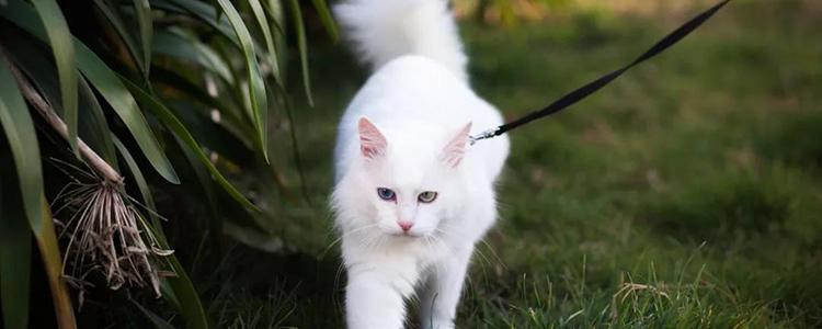 被猫抓伤了要打针吗 狂犬疫苗非打不可吗?
