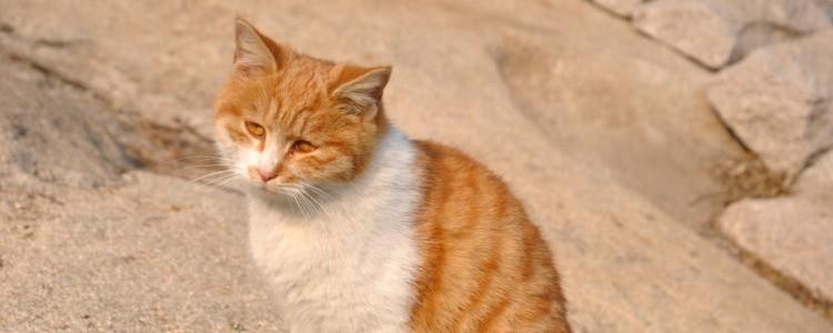怎么拿水测猫粮好坏 教你用这种办法来测试猫粮买的对不对