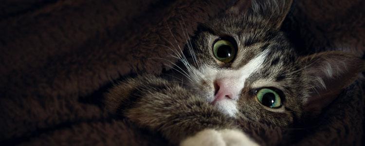 猫突然站不起来侧躺着 可能是骨折了!