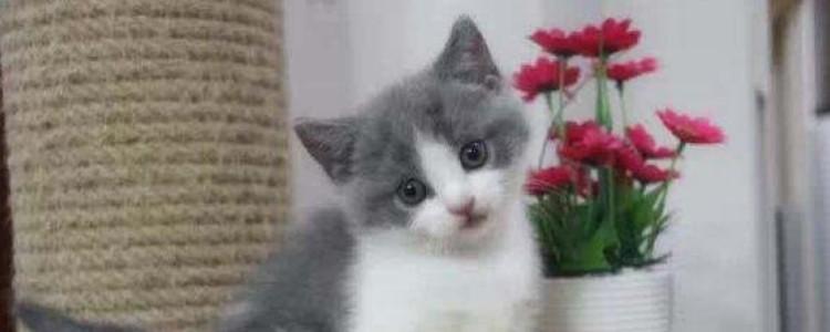 小猫睡着后呼吸急促 呼吸急促的情况你判断明白了吗?