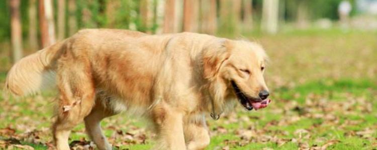 母狗绝育危险吗 是手术就都会有风险性!