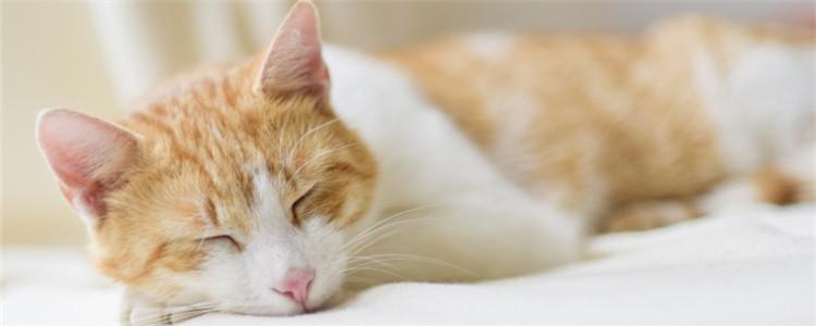 如何确认猫舍有给猫打疫苗 这三种方法你不得不知