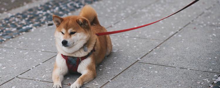 狗狗神经受损如何恢复 主人一定要有耐心哦!