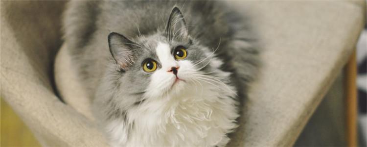 2岁的猫能不能养熟 养猫需要耐心和时间