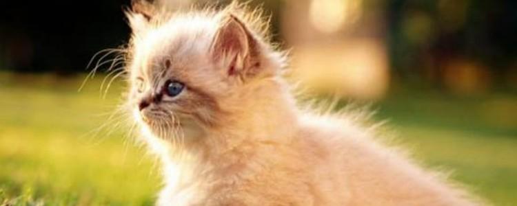 撸猫是什么意思 撸猫这么可爱的行为你要多了解一下
