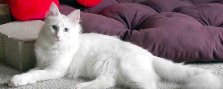 怎么撸猫 正确撸猫可以让你成为猫奴!