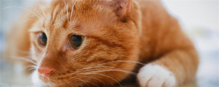 猫咪流口水,透明的不臭 是正常现象吗