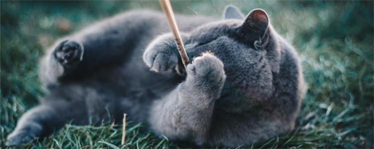 公猫尿频尿少 猫咪尿频是为什么