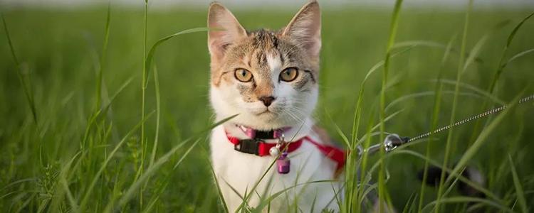 阿莫西林能治猫口炎吗 抗生素别再乱用啦又不是神药!