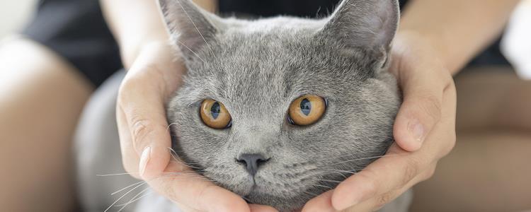 猫刚到家躲起来 千万不要硬扯猫咪哦!