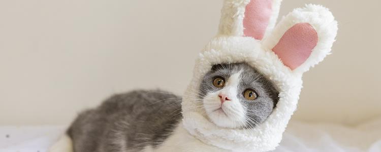 猫吃蟑螂会不会生病 要避免猫咪误食蟑螂哦!