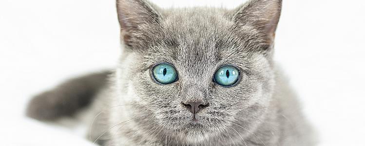 猫会发出呛到的声音 主人要注意科学喂养哦!
