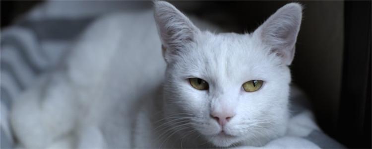 猫见红到生产一般多久 猫咪生产前一定要多加注意