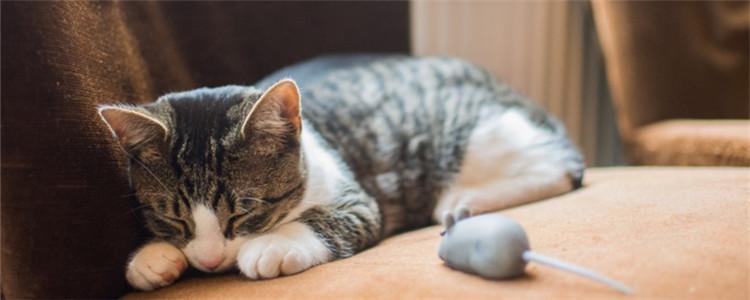 生病猫咪快死前的症状 出现这些症状一定要注意