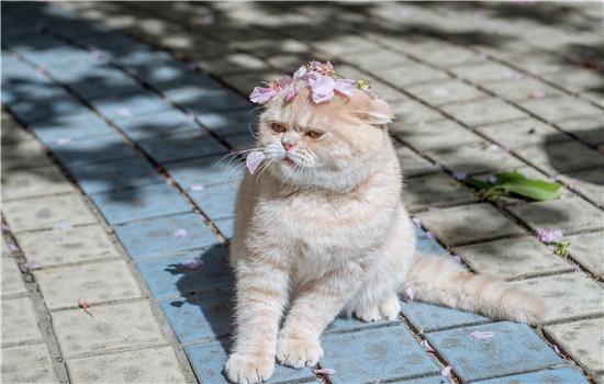 猫咪突然爱叫啥原因 这三种原因你知道吗?-轻博客