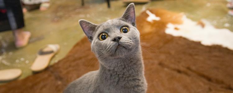 猫咪后背有软的鼓包 小心皮肤肿瘤哦!