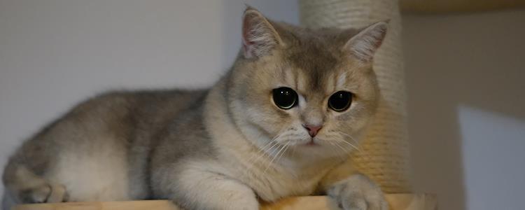 猫咪呼吸道感染 此病幼猫多发哦!