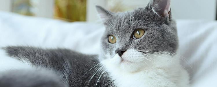 猫晚上不睡觉折腾人 原来是主人错了?