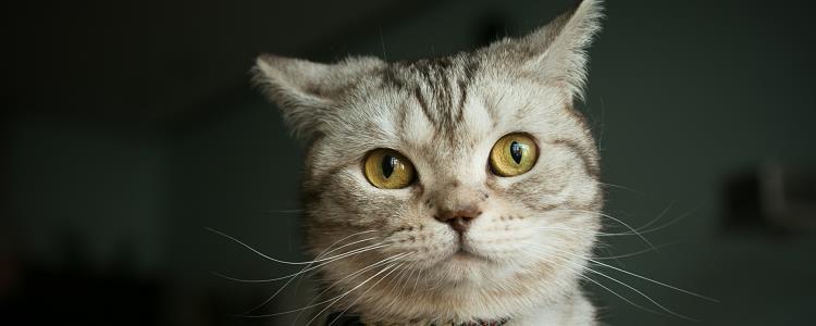 猫有味觉吗 爱吃甜食的铲屎官可能会觉得猫很可怜..